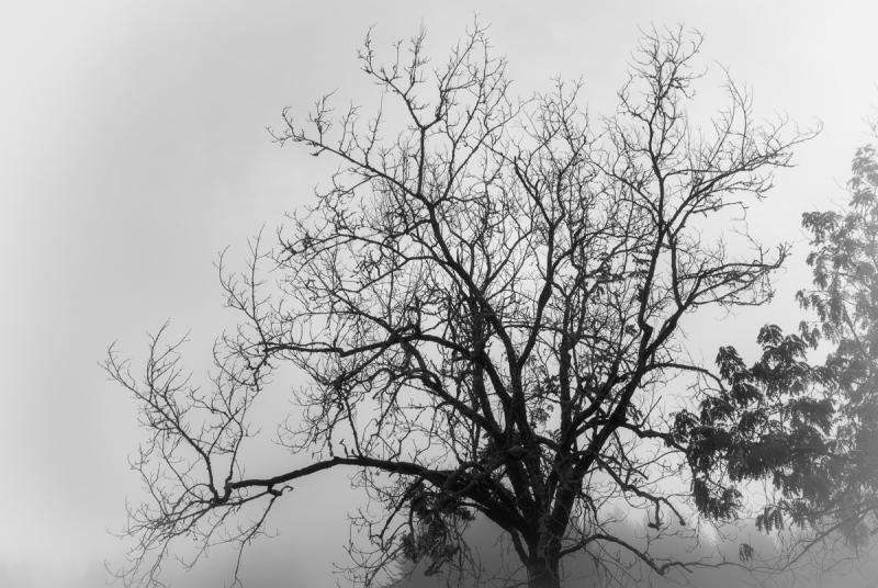 Fog Shot Medley #2