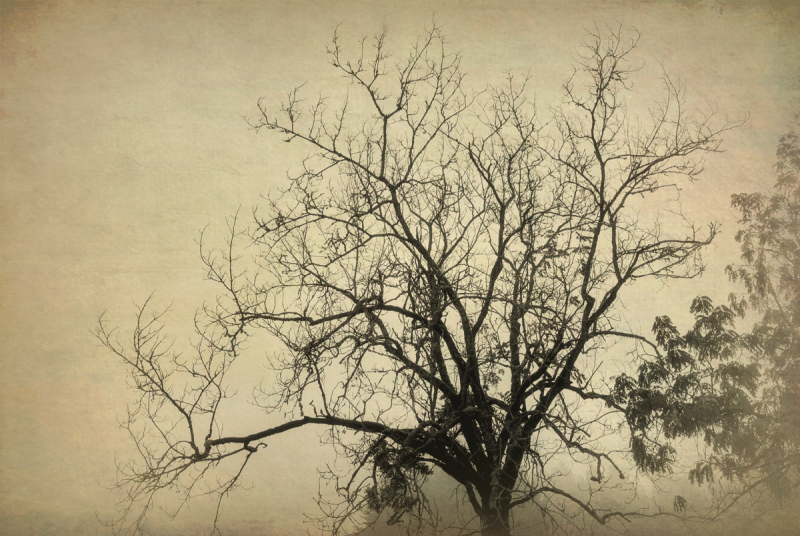 Fog Shot Medley #3