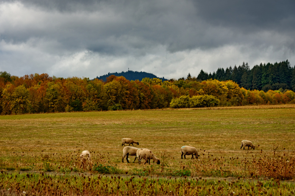 """Autumn in Corvallis"""