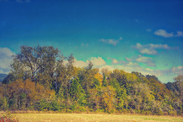 """Beautiful Fall Day""  (Topaz Texture Effects 2)"