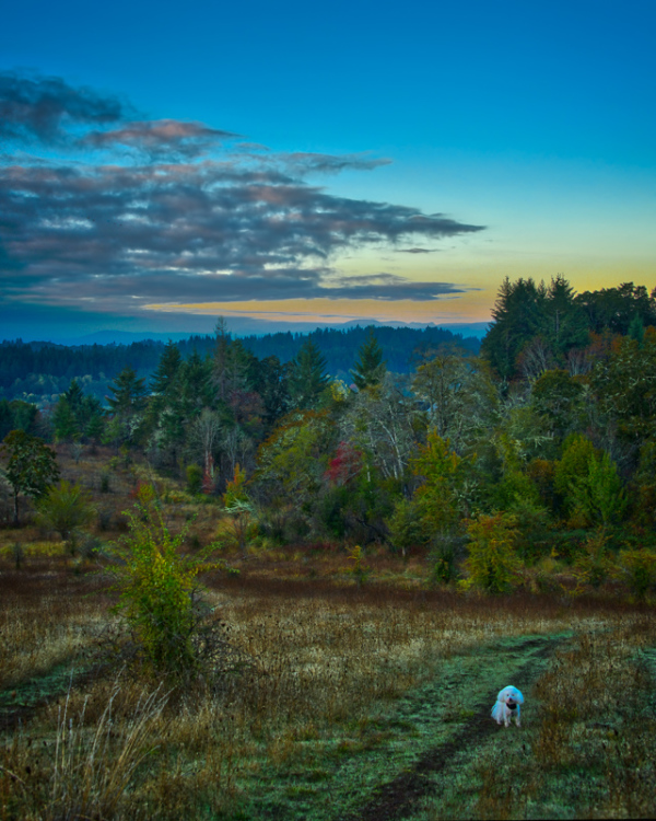 """Pre-sunrise Timberhill Natural Area"" #2"