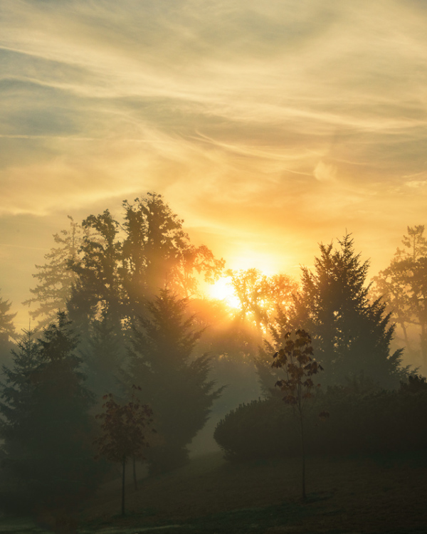 """Sunrise Through the Fog"""