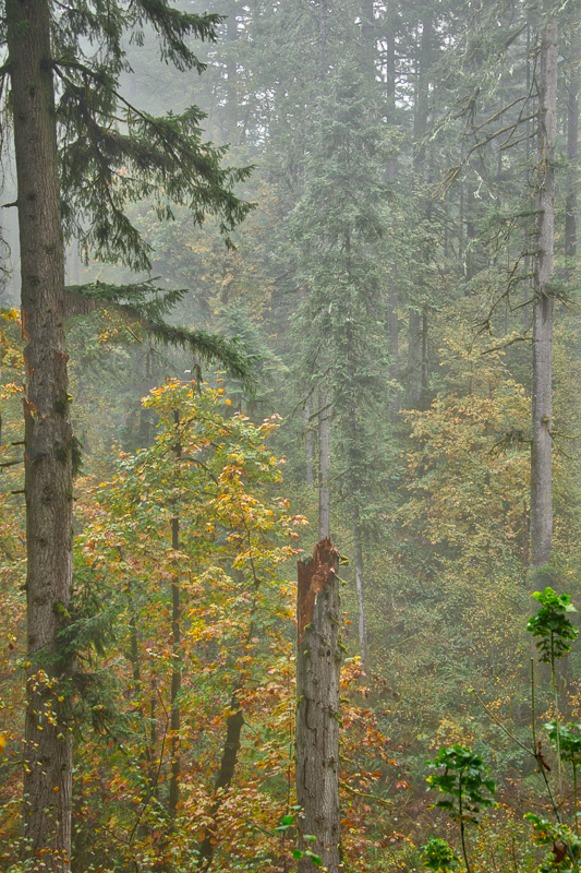 Autumn in the Old Growth Forest #2