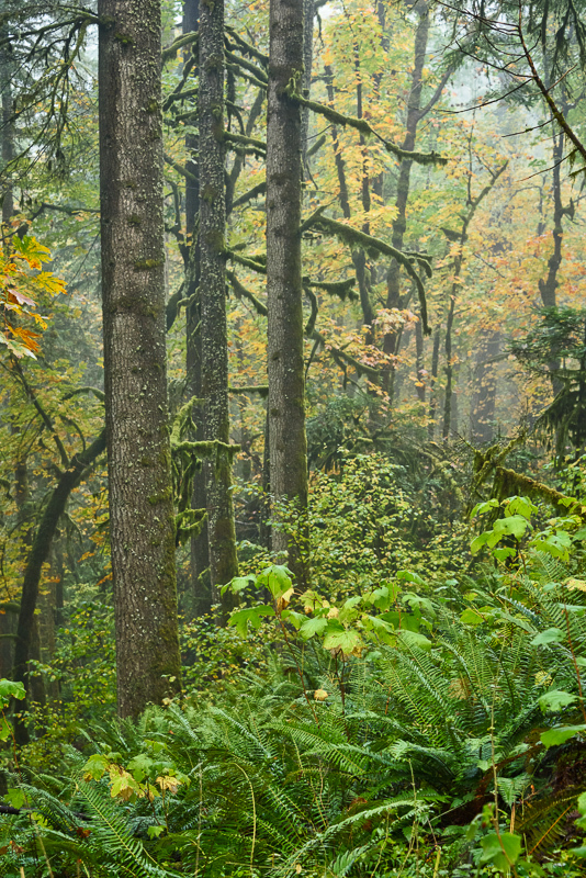 Autumn in the Old Growth Forest #9