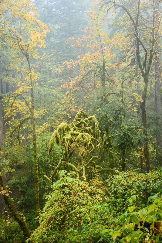 Autumn in the Old Growth Forest #11