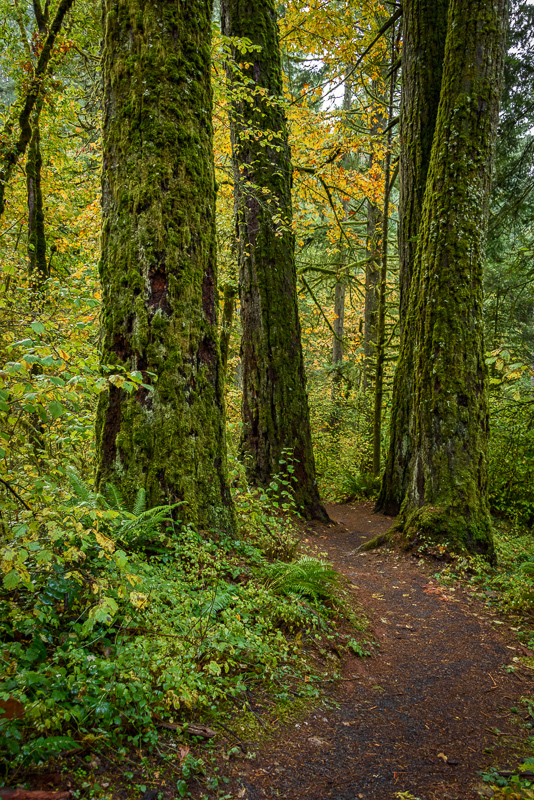 Autumn in the Old Growth Forest #14