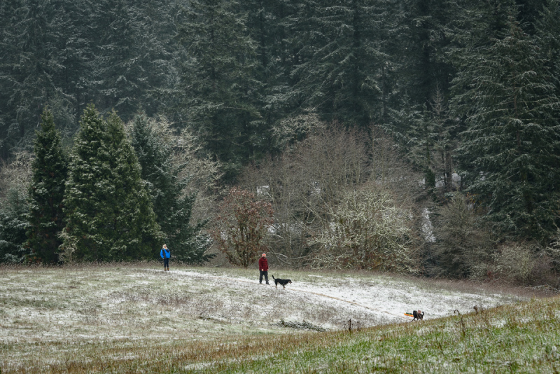 """""""Snow in the Dog Park"""" #4"""