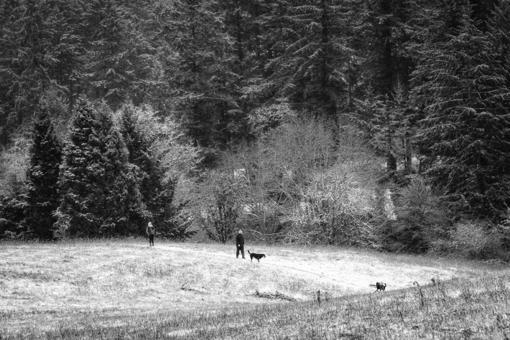 """Snow in the Dog Park"" #4 BW"