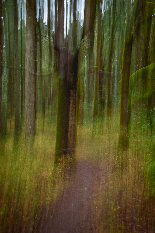 ICM in the Witham Hill Natural Area, #2