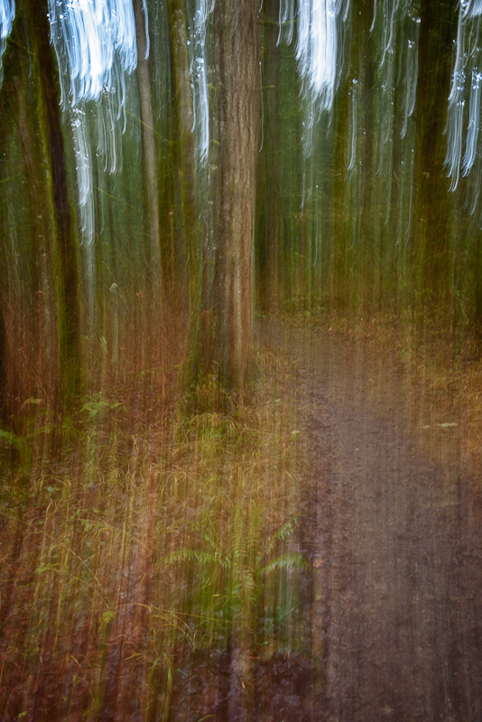ICM in the Witham Hill Natural Area, #3