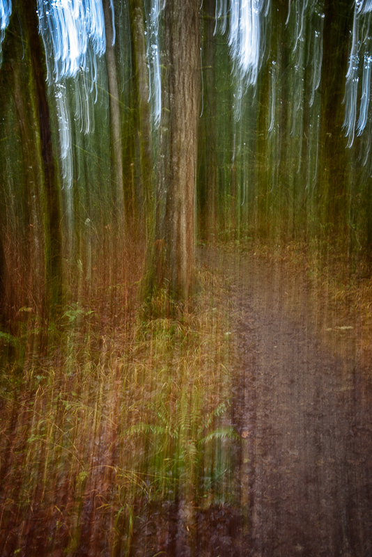ICM in the Witham Hill Natural Area, #3a