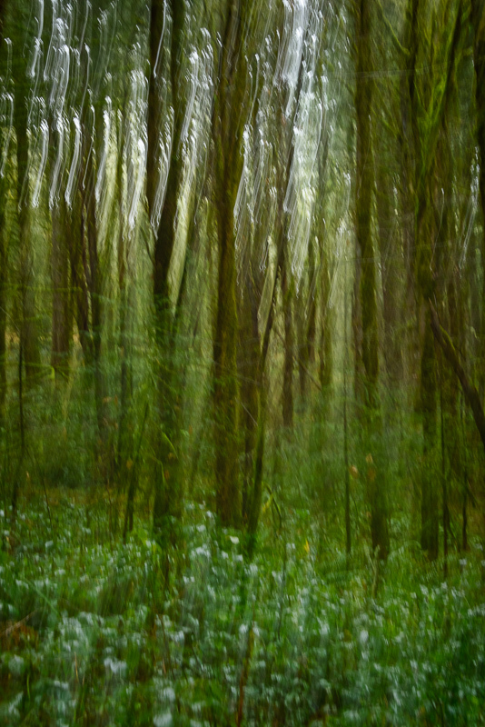 ICM in the Witham Hill Natural Area, #4