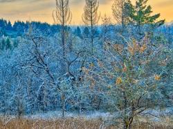 """Winter Delight"""