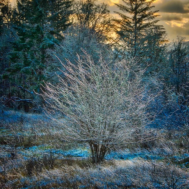 """""""Snow Magic"""""""