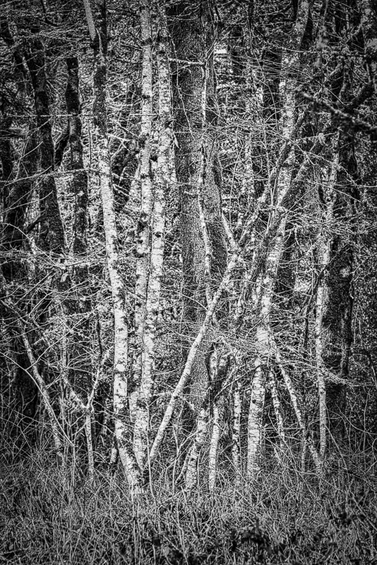 """""""Witham Hill Natural Area, Dramatic BW"""""""