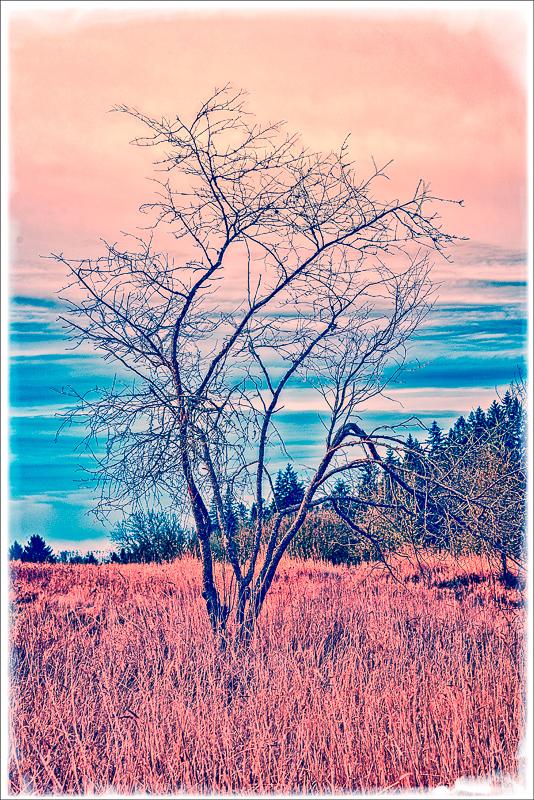 Standing Alone (Photomorphis)