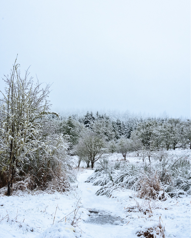 Snowtime in the Timberhill Natural Area