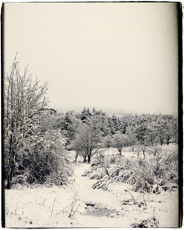 Snowtime in the TNA (Photomorphis ExpressionBW)