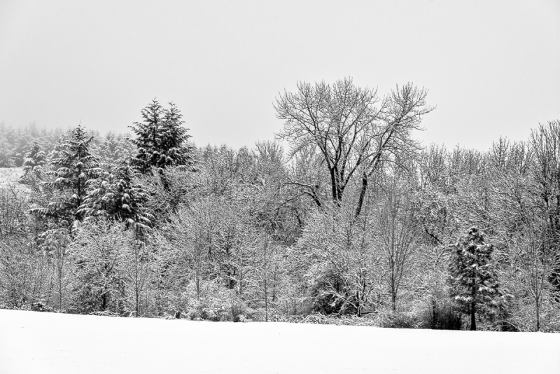 Snowy Morning BW