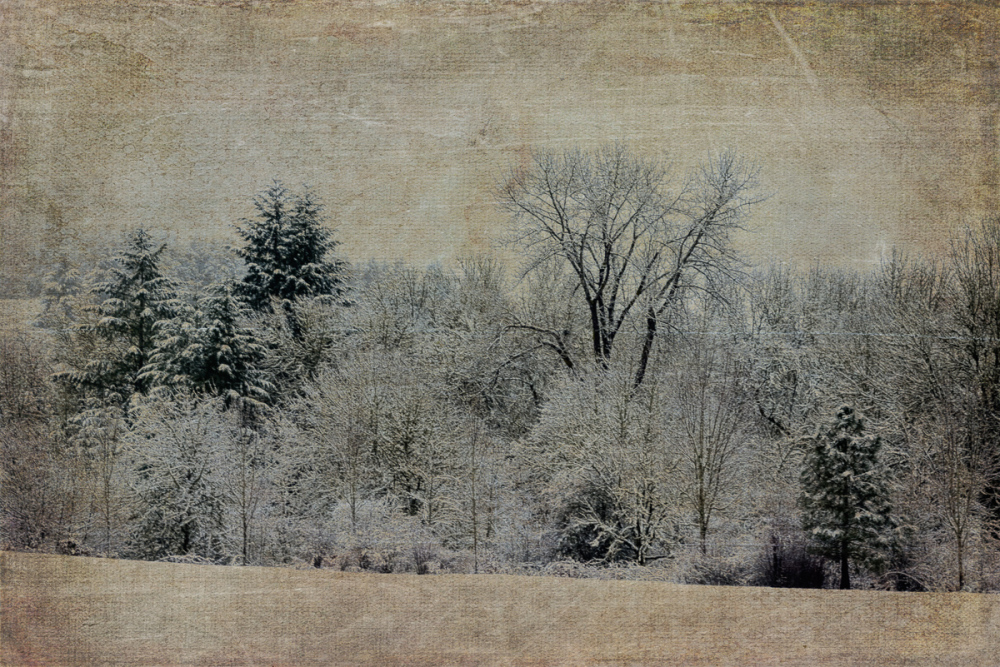 Snowy Morning (Texture Added)