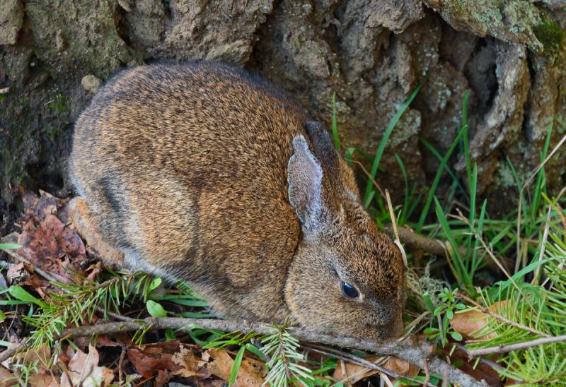Ya Gotta Love a Bunny