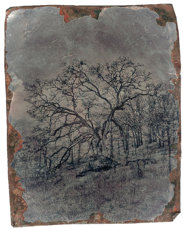 My Tree (infrared) Tin Type overlay