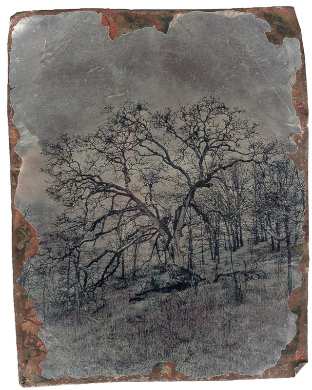 My Tree (infrared) Tin Type overlay