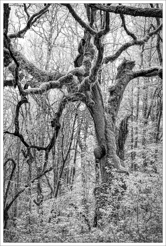 """""""Witham Hill Natural Park Etching (infrared)"""""""