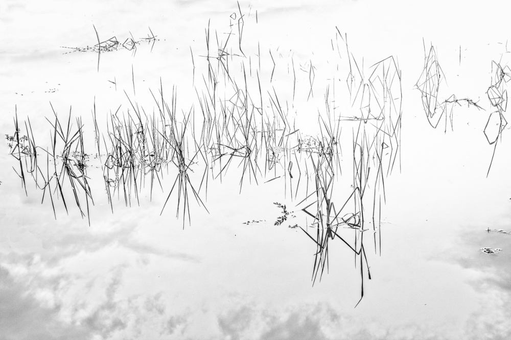 Jackson-Frazier Wetlands BW