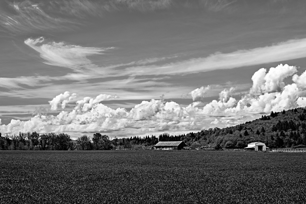"""Clouds & Greens BW"""