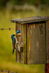 """Love Birds (sans border and texture)"
