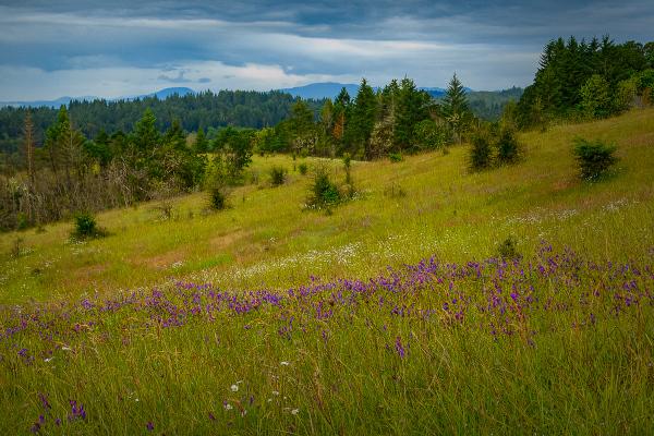 Early Summer Wildflowers