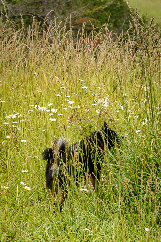 Sadie in the Grass