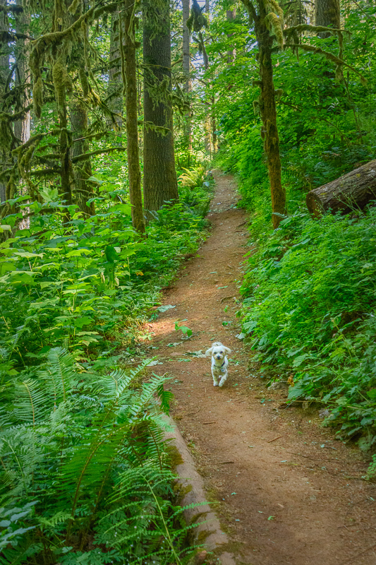 """""""Lizzie in the Old Growth Forest"""""""