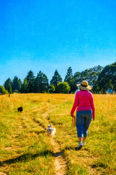 Ellie, Lizzie and Sadie in the Dog Park-painterly