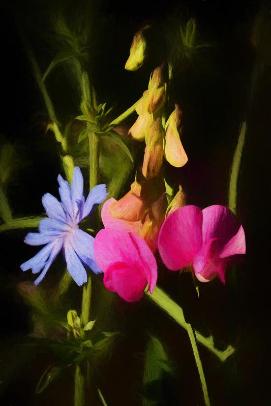 """""""Wildflowers Abound"""""""