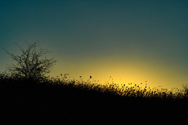 """Sunrise Silhouette"""