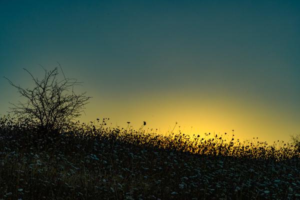 """Sunrise Silhouette (opened shadows)"""