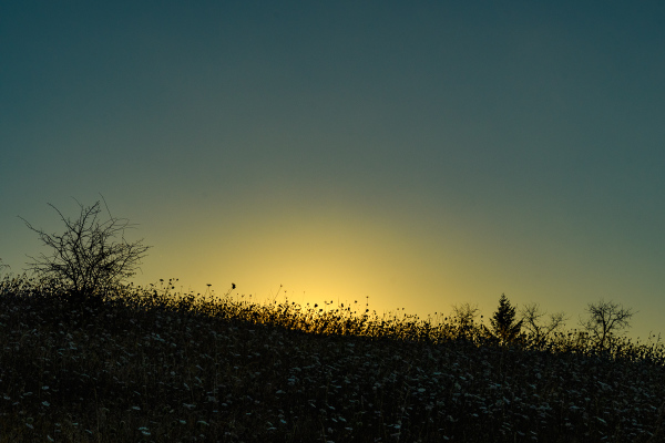 """Sunrise Silhouette #2 (opened shadows)"""