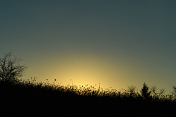 """Sunrise Silhouette #2"""