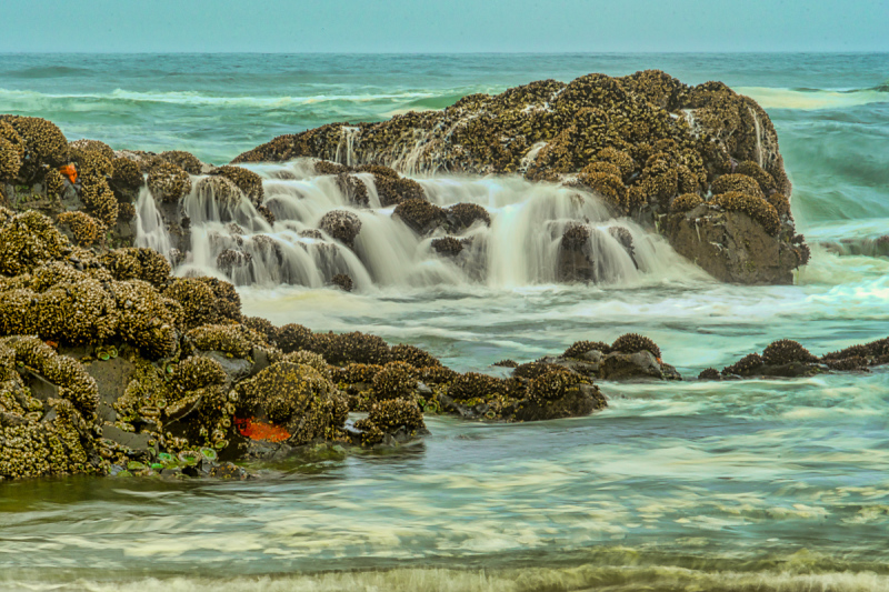 Mystical Quail St. Beach #2