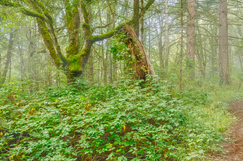 Fog in  Timberhill Natural Park