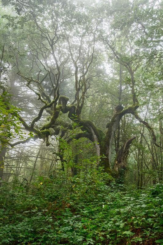 Fog in Timberhill Natural Park #2