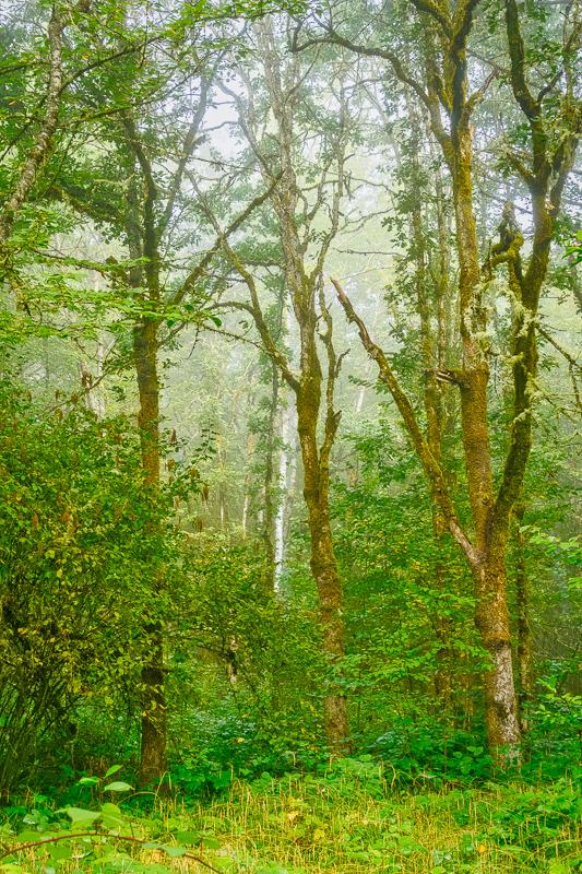 Fog in Timberhill Natural Park #3