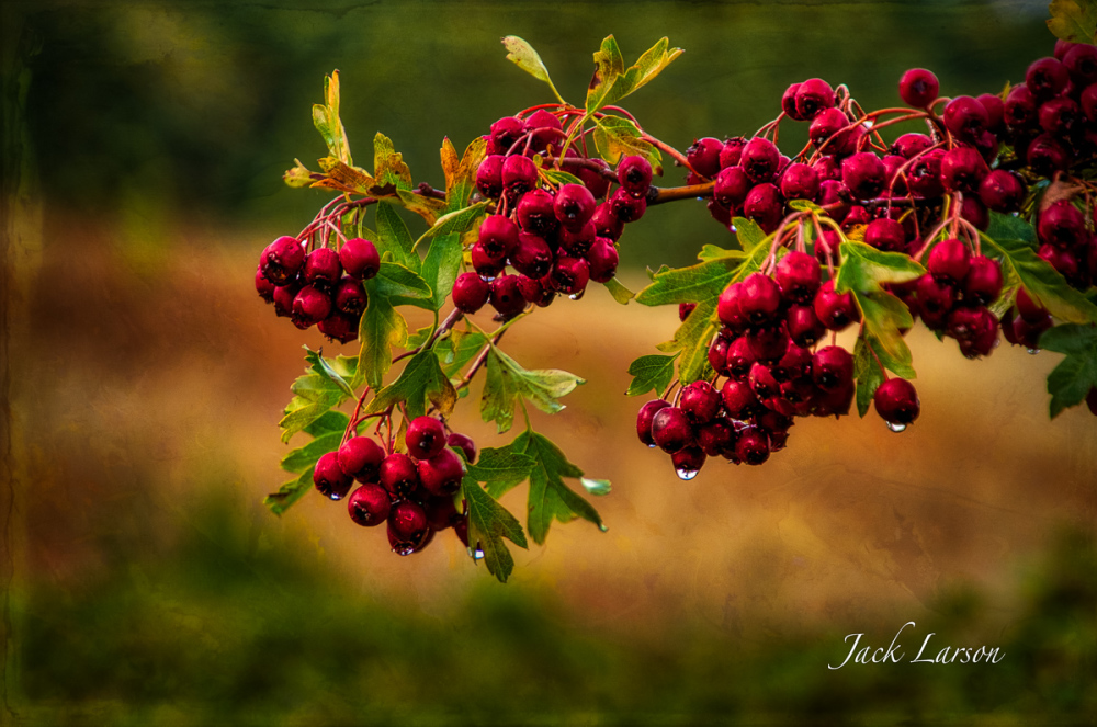 Berries Along the Trail