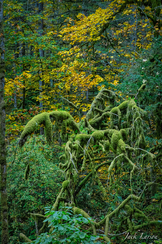 Fall in the Old Growth Forest