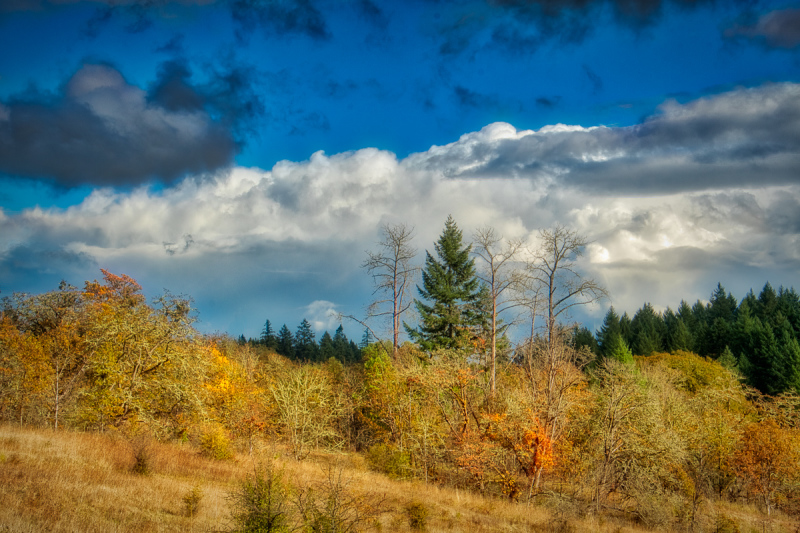 """Fall Rain Clouds in the Timberhill Natural Area"""