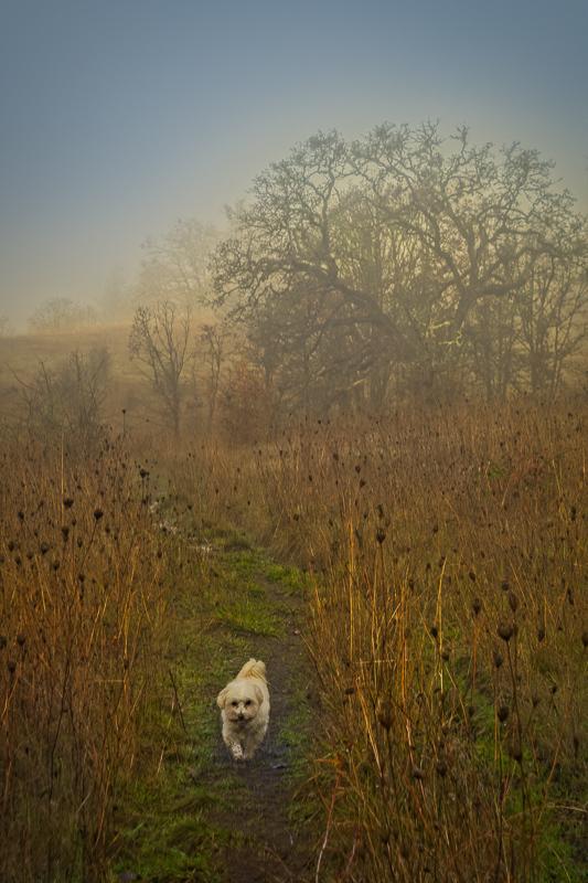 """Lizzie & My Tree in Sunday Morning Fog"""