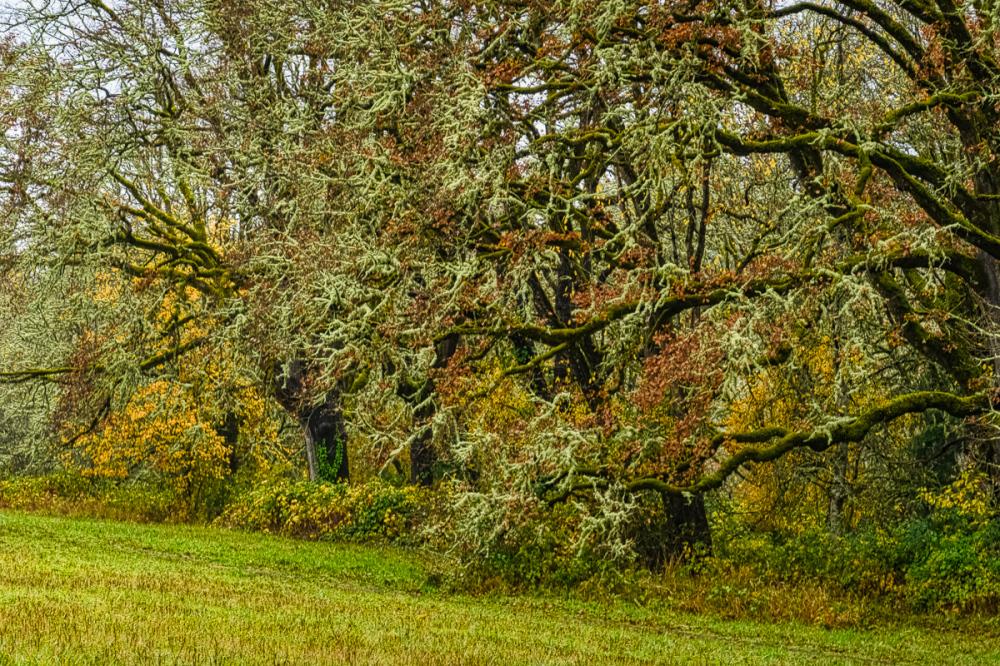 Edge of the Dog Park on a Rainy Day