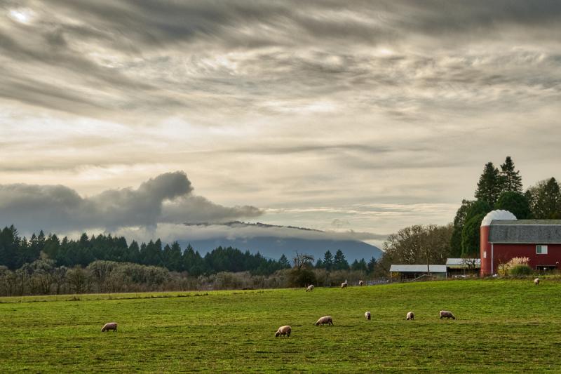 Sheep & Sky